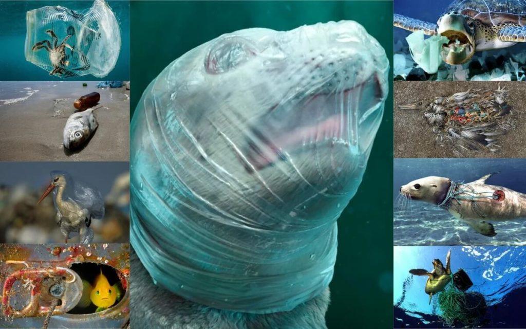 Пластик в мировом океане убивает обитателей водной среды