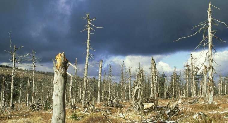 Негативное влияние кислотных дождей на леса