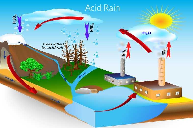Влияние кислотных дождей на окружающую среду