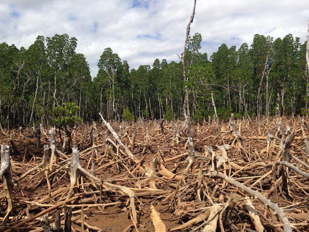 Массовая вырубка леса во многих странах