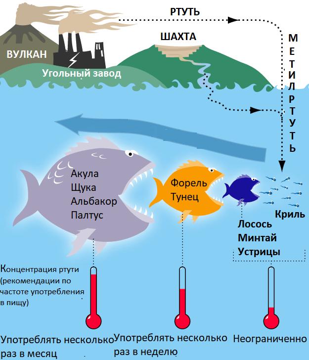 Загрязнение воды тяжелыми металлами