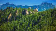 Экологические проблемы в тайге и пути их решения
