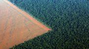 Вырубка лесов – экологическая проблема в России и мире