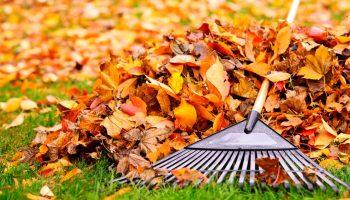 Переработка и утилизация опавших листьев