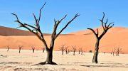 Экологические проблемы пустынь и полупустынь: причины и решения
