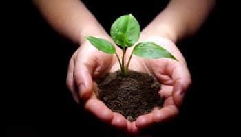 Направления экологического земледелия, которые каждый может использовать на даче