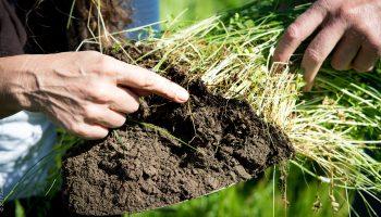 Почему почву надо охранять, мероприятия направленные на охрану почвенных ресурсов