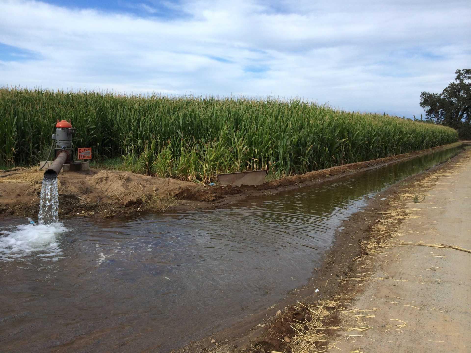 Источники загрязнения воды сельским хозяйством