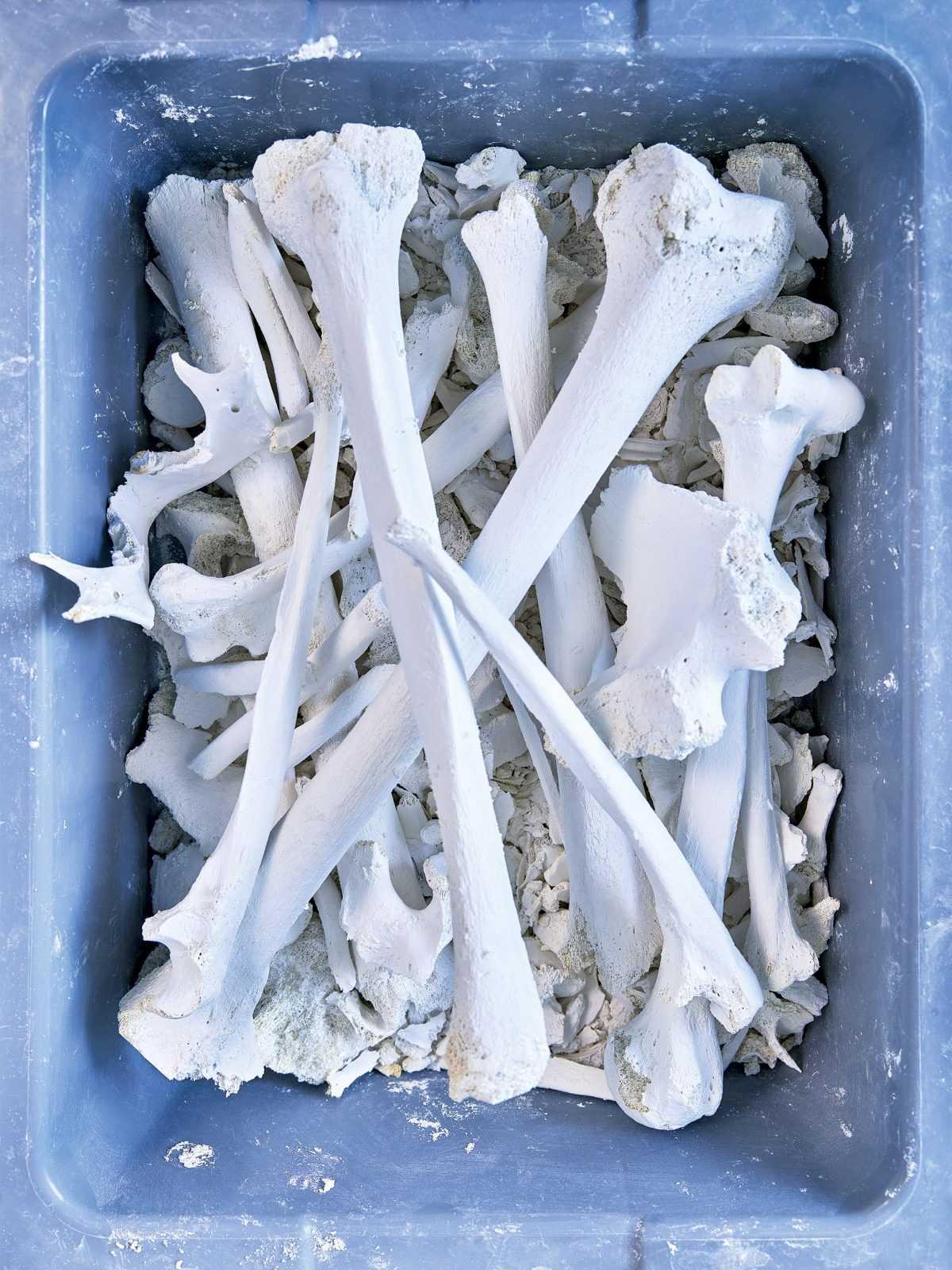 Переработка и утилизация костей на производстве