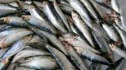 Переработка морепродуктов и рыбы: оборудование и устройство цеха