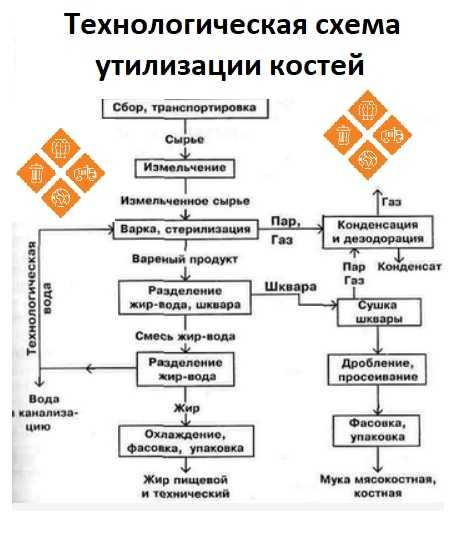Этапы утилизации костей