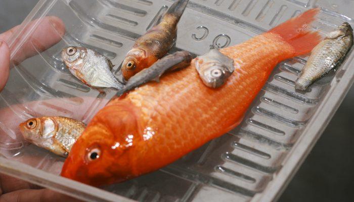 Технологии переработки рыбы: создание удобрений, рыбной муки в мини-цехе