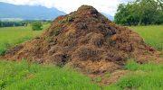 Что относится и способы утилизации сельскохозяйственных отходов