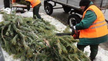 Как лучше всего утилизировать Новогоднюю елку?