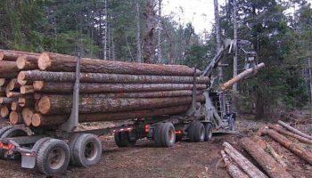 Проблемы лесной промышленности