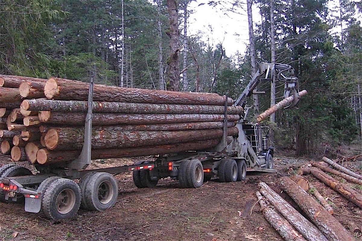 Экологические проблемы лесной промышленности в России и их решение
