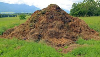 Переработка навоза в биогаз, топливо, удобрения, картон, гранулирование