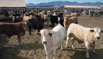 Переработка отходов животноводства в удобрения, топливо и корм