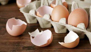 Методы, правила, оборудование и продукты переработки яиц